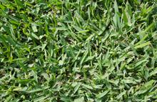 Kakdu Grass Turf