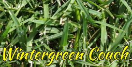 Wintergreen Couch Grass & Turf